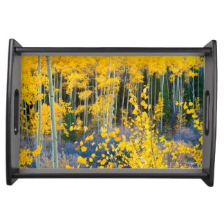 USA, Colorado. Bright Yellow Aspens In Rockies 2 Serving Tray