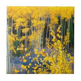 USA, Colorado. Bright Yellow Aspens In Rockies 2 Small Square Tile