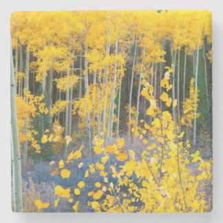 USA, Colorado. Bright Yellow Aspens In Rockies 2 Stone Coaster