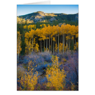 USA, Colorado. Bright Yellow Aspens in Rockies Card