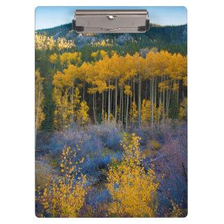USA, Colorado. Bright Yellow Aspens in Rockies Clipboard