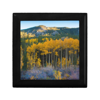 USA, Colorado. Bright Yellow Aspens in Rockies Gift Box