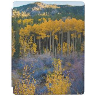 USA, Colorado. Bright Yellow Aspens in Rockies iPad Cover