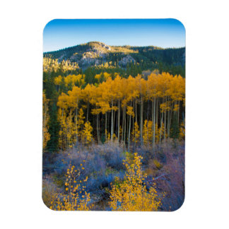 USA, Colorado. Bright Yellow Aspens in Rockies Magnet