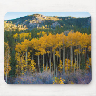 USA, Colorado. Bright Yellow Aspens in Rockies Mouse Mat