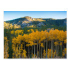 USA, Colorado. Bright Yellow Aspens in Rockies Postcard