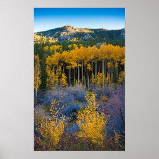 USA, Colorado. Bright Yellow Aspens in Rockies Poster