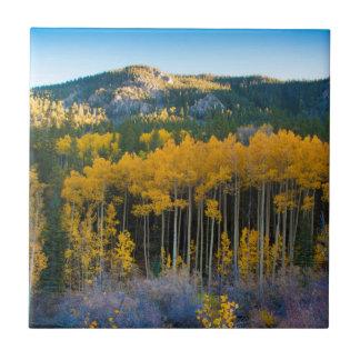 USA, Colorado. Bright Yellow Aspens in Rockies Small Square Tile