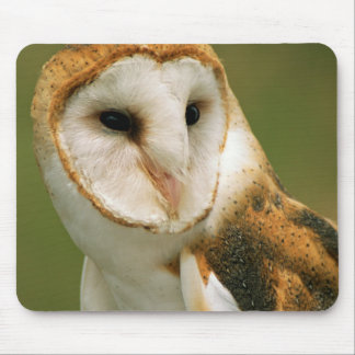 USA, Colorado, Broomfield. Barn owl Mouse Mat