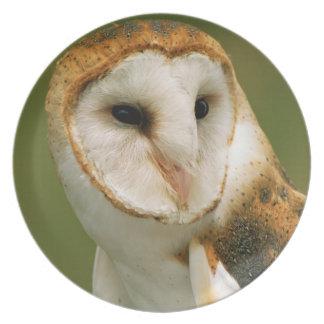 USA, Colorado, Broomfield. Barn owl Plate