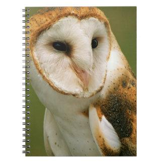 USA, Colorado, Broomfield. Barn owl Spiral Notebook