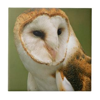 USA, Colorado, Broomfield. Barn owl Tile