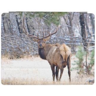 USA, Colorado, Bull Elk Looking Back iPad Cover