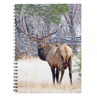 USA, Colorado, Bull Elk Looking Back Notebooks