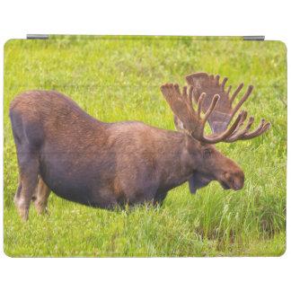 USA, Colorado, Cameron Pass. Bull Moose iPad Cover