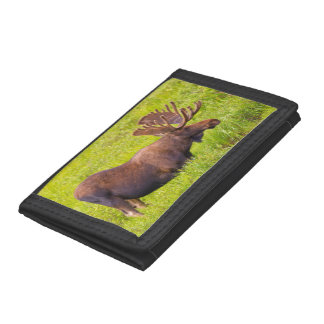 USA, Colorado, Cameron Pass. Bull Moose Trifold Wallet