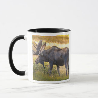 USA, Colorado, Cameron Pass. Bull moose with Mug