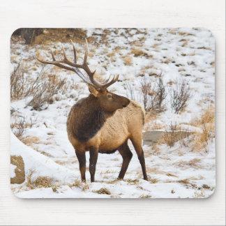 USA, Colorado, Close-Up Of Bull Elk Mouse Mat