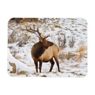 USA, Colorado, Close-Up Of Bull Elk Rectangular Photo Magnet