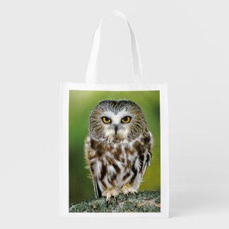 USA, Colorado. Close-up of northern saw-whet owl