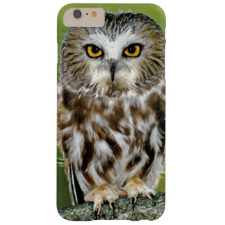 USA, Colorado. Close-up of northern saw-whet owl Barely There iPhone 6 Plus Case