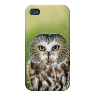 USA, Colorado. Close-up of northern saw-whet owl Cover For iPhone 4