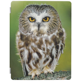 USA, Colorado. Close-up of northern saw-whet owl iPad Cover