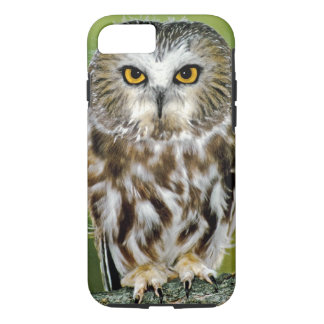 USA, Colorado. Close-up of northern saw-whet owl iPhone 8/7 Case