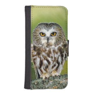 USA, Colorado. Close-up of northern saw-whet owl iPhone SE/5/5s Wallet Case