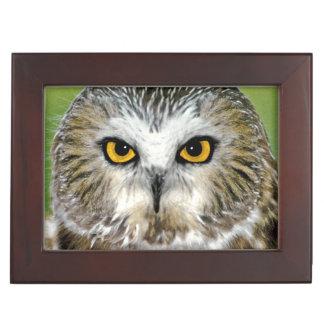 USA, Colorado. Close-up of northern saw-whet owl Keepsake Box