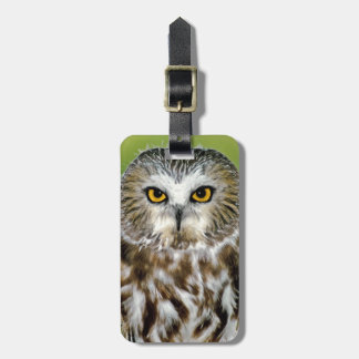 USA, Colorado. Close-up of northern saw-whet owl Luggage Tag