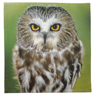 USA, Colorado. Close-up of northern saw-whet owl Napkin
