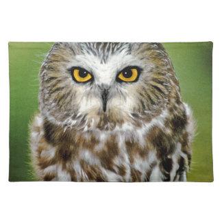 USA, Colorado. Close-up of northern saw-whet owl Place Mat