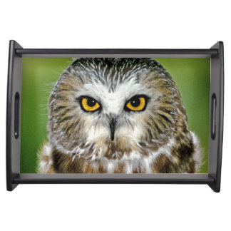 USA, Colorado. Close-up of northern saw-whet owl Serving Tray