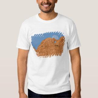 USA, Colorado, Colorado Springs, Garden of the Tshirt