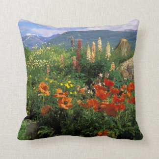 USA, Colorado, Crested Butte. Poppies and lupine Cushion
