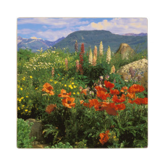 USA, Colorado, Crested Butte. Poppies and lupine Wood Coaster