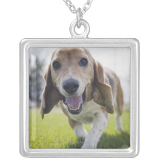 USA, Colorado, curious dog walking towards Silver Plated Necklace