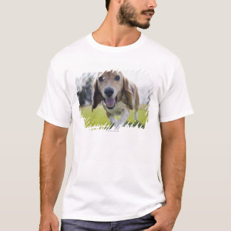 USA, Colorado, curious dog walking towards T-Shirt