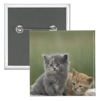 USA, Colorado, Divide. Two barn kittens pose on 15 Cm Square Badge