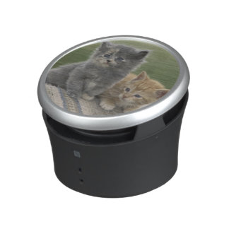 USA, Colorado, Divide. Two barn kittens pose on Bluetooth Speaker