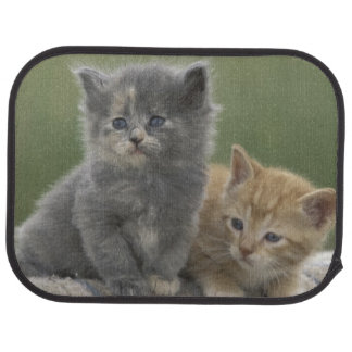 USA, Colorado, Divide. Two barn kittens pose on Car Mat