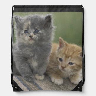 USA, Colorado, Divide. Two barn kittens pose on Drawstring Bag