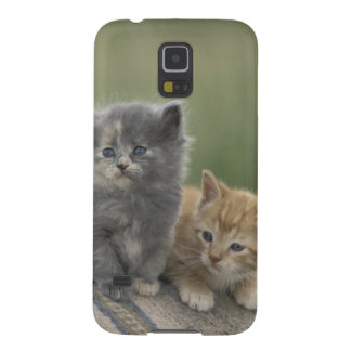 USA, Colorado, Divide. Two barn kittens pose on Galaxy S5 Case
