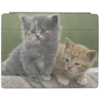 USA, Colorado, Divide. Two barn kittens pose on iPad Cover
