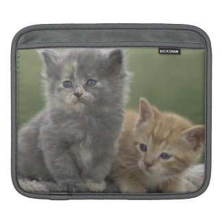 USA, Colorado, Divide. Two barn kittens pose on iPad Sleeve