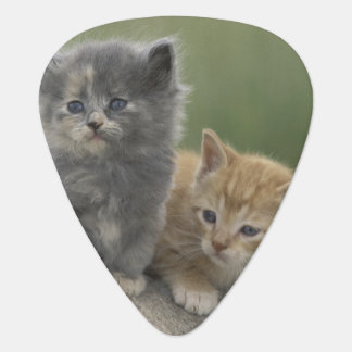 USA, Colorado, Divide. Two barn kittens pose on Plectrum