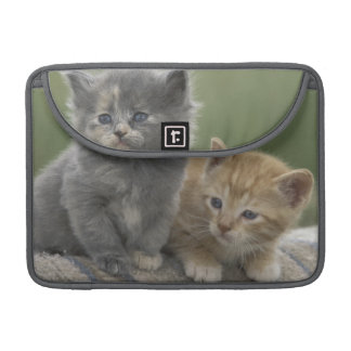 USA, Colorado, Divide. Two barn kittens pose on Sleeve For MacBooks