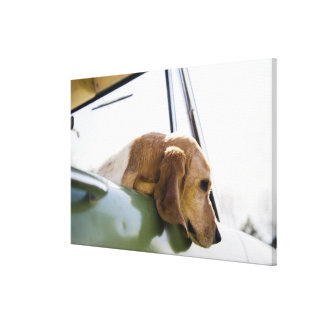 USA, Colorado, dog looking through car window 2 Canvas Print