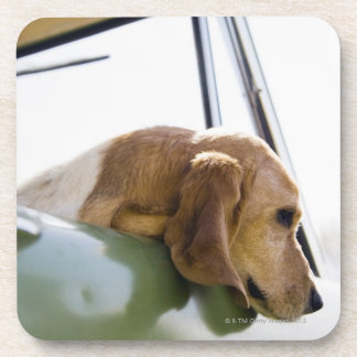USA, Colorado, dog looking through car window Coaster